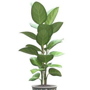تحميل موديلات  323 Plant نبات