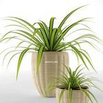 تحميل موديلات  324 Plant نبات