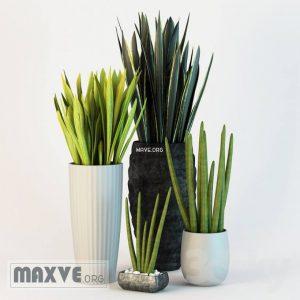 تحميل موديلات  329 Plant نبات