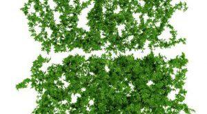 تحميل موديلات  332 Plant نبات