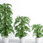 تحميل موديلات  335 Plant نبات