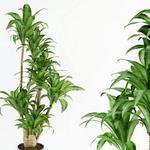 تحميل موديلات  337 Plant نبات