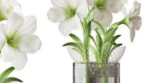 تحميل موديلات  340 Plant نبات