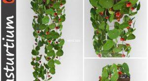 تحميل موديلات  341 Plant نبات