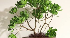 تحميل موديلات  347 Plant نبات