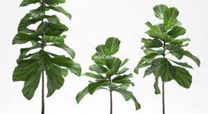 تحميل موديلات  350 Plant نبات