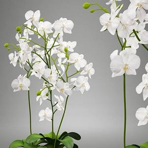 تحميل موديلات  353 Plant نبات