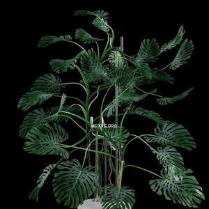 تحميل موديلات  354 Plant نبات