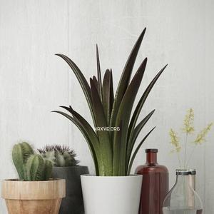 تحميل موديلات  357 Plant نبات