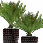 تحميل موديلات  359 Plant نبات