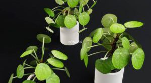 تحميل موديلات  370 Plant نبات
