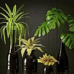تحميل موديلات  371 Plant نبات