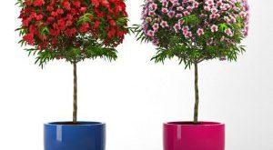 تحميل موديلات  374 Plant نبات