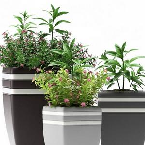 تحميل موديلات  387 Plant نبات