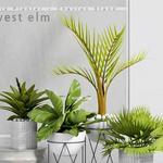تحميل موديلات  389 Plant نبات