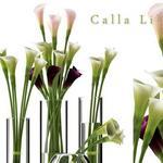 تحميل موديلات  391 Plant نبات
