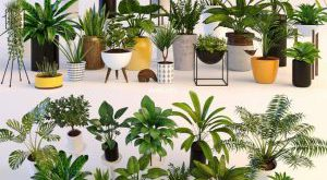 تحميل موديلات  394 Plant نبات