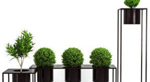 تحميل موديلات  398 Plant نبات