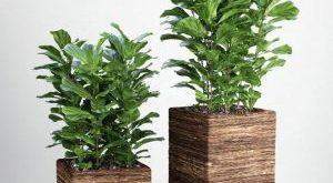 تحميل موديلات  401 Plant نبات