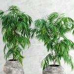 تحميل موديلات  407 Plant نبات