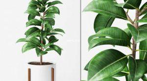 تحميل موديلات  414 Plant نبات