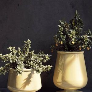 تحميل موديلات  419 Plant نبات