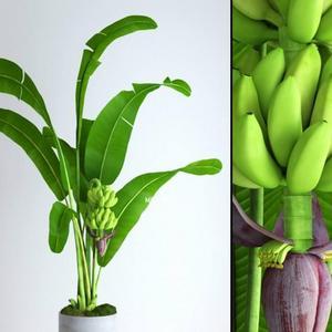 تحميل موديلات  421 Plant نبات