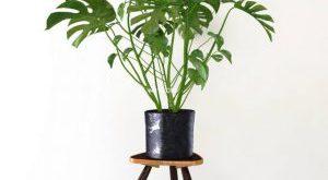 تحميل موديلات  423 Plant نبات