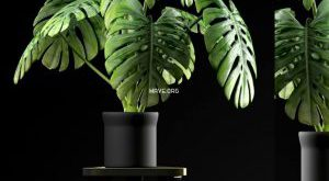 تحميل موديلات  426 Plant نبات