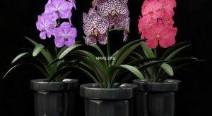 تحميل موديلات  427 Plant نبات