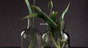 تحميل موديلات  430 Plant نبات