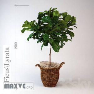 تحميل موديلات  431 Plant نبات