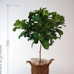 تحميل موديلات  432 Plant نبات