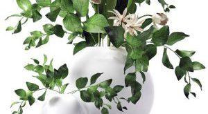 تحميل موديلات  435 Plant نبات
