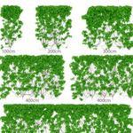 تحميل موديلات  437 Plant نبات