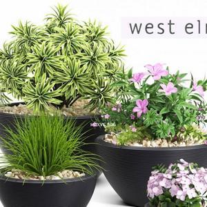 تحميل موديلات  442 Plant نبات