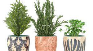 تحميل موديلات  443 Plant نبات