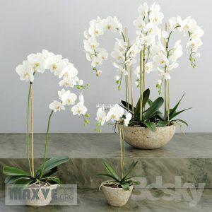تحميل موديلات  447 Plant نبات