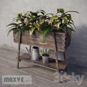 تحميل موديلات  456 Plant نبات