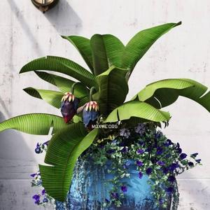 تحميل موديلات  463 Plant نبات