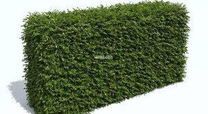 تحميل موديلات  469 Plant نبات