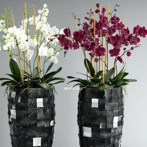 تحميل موديلات  471 Plant نبات