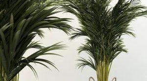 تحميل موديلات  477 Plant نبات