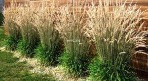تحميل موديلات  485 Plant نبات