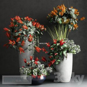 تحميل موديلات  497 Plant نبات