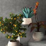 تحميل موديلات  499 Plant نبات