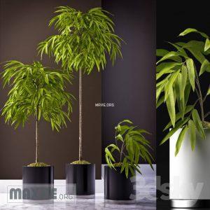 تحميل موديلات  501 Plant نبات