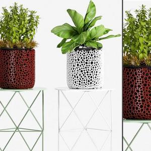 تحميل موديلات  502 Plant نبات