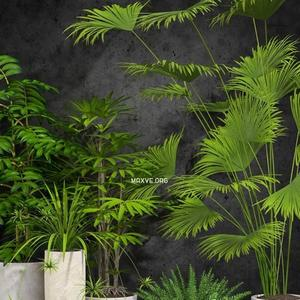 تحميل موديلات  510 Plant نبات