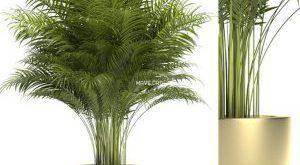 تحميل موديلات  513 Plant نبات
